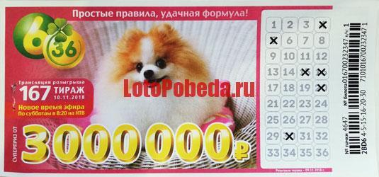 Лотерея 6 из 36 тираж 167 - с рыжей собакой